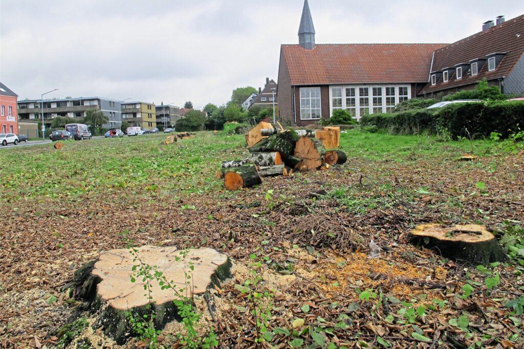 Auf dem Areal der Lutherkirche wurden zum Ärger von Anwohnern und Naturschützern etliche große Bäume gefällt, lange bevor konkrete Neubaupläne vorlagen.