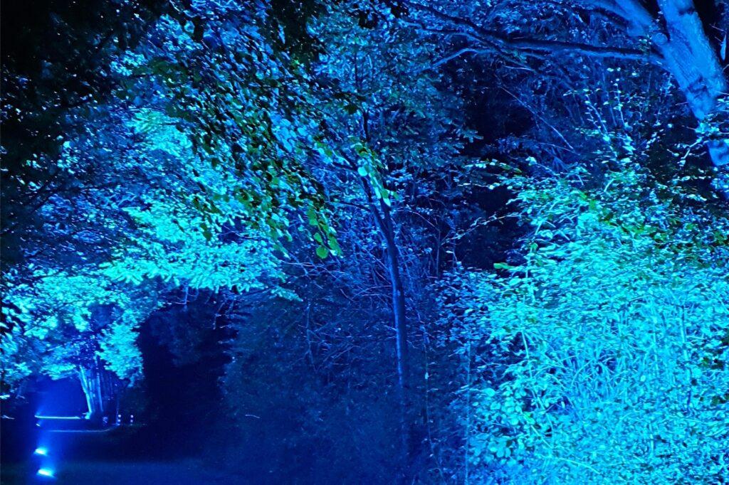 Blaues Licht verwandelte die alte Zechenbahntrasse an dieser Stelle in einen verwunschenen Zauberwald.